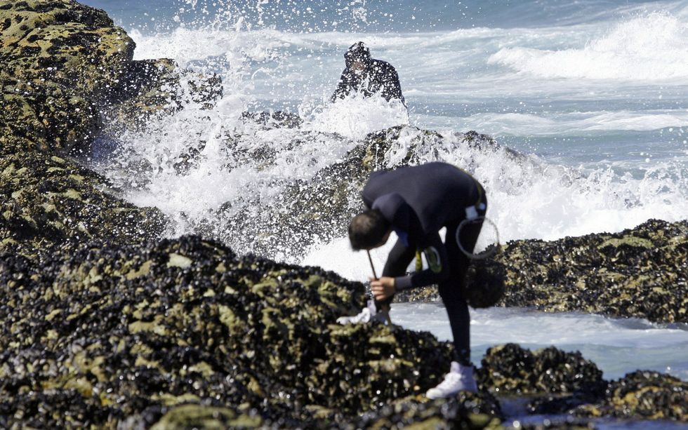 """""""Percebeiros"""" (barnacle catchers): one of the most difficult jobs in Galicia"""